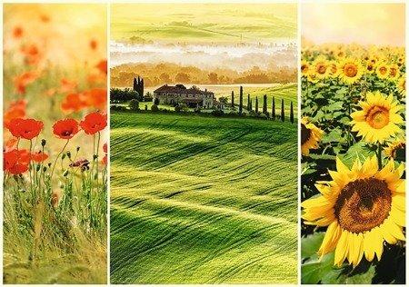 Trefl Puzzle Romantic Słoneczna Toskania 1000 el.